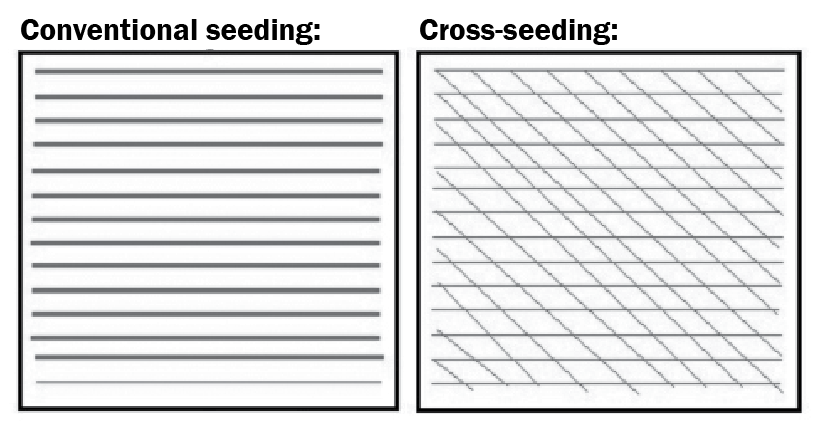 cross-seeding