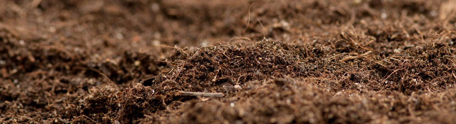 Liming Acidic Soils To Improve Soil And